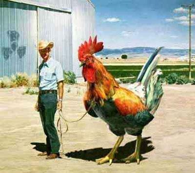 pollo-engorda-dañina-ser-humano